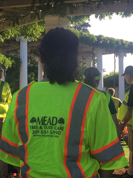 Nalp Renewal And Remembrance At Arlington National Cemetery Mead Tree Turf